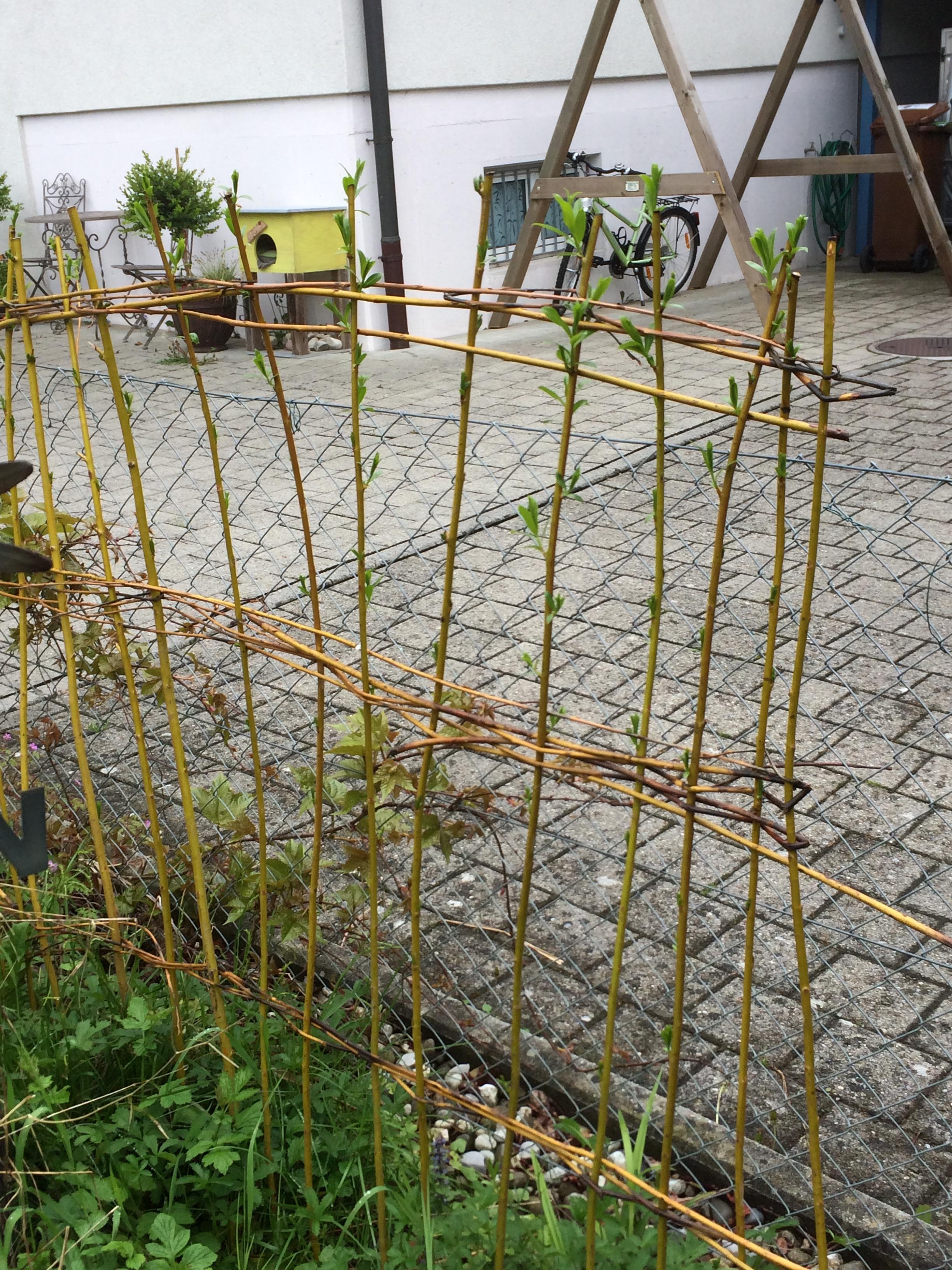 lebender zaun sichtschutz sichtschutz echter efeu balkon terrasse verkleidung lebender. Black Bedroom Furniture Sets. Home Design Ideas